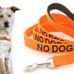 NO DOGS Orange Color Coded L-XL Non Pull Dog Harness and 2 4 6 Foot Padded Leash Sets (Not Good With Other Dogs) PREVENTS Accidents By Warning Others of Your Dog in Advance (Harness + 4 Foot Leash)
