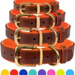 CollarDirect Leather Dog Collar Brass Buckle Soft Padded Puppy Small Medium Large Red Pink Blue Green Purple Yellow (Neck Fit 12″-14″, Orange)